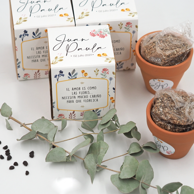 Kit de semillas petunias